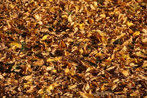 leaves fall autumn leaves