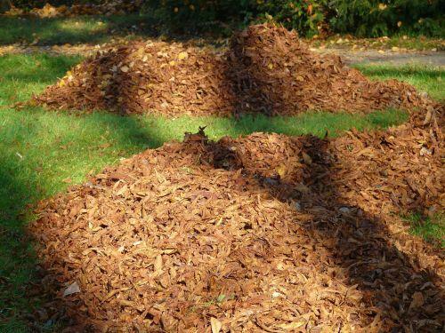 leaves leaf piles park