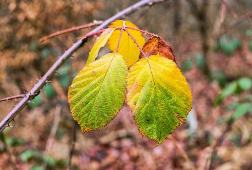 leaves colorful emerge