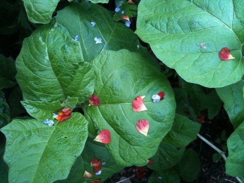 leaves petals red petals