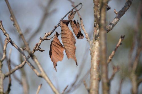 leaves arid aesthetic