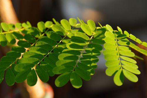 leaves shadows green