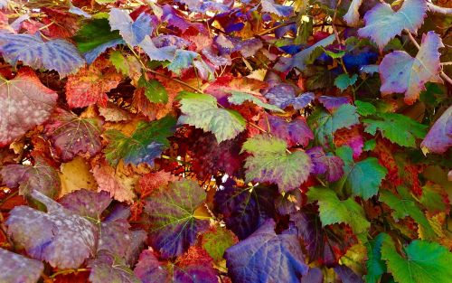 leaves autumn faded
