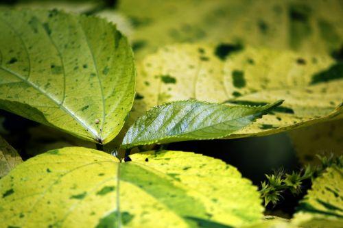 leaves,greenleaves,yellowleaves,leaf,plants,background,pattern,leaves