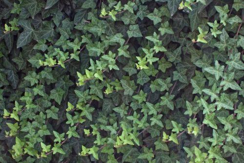 leaves leaf plant
