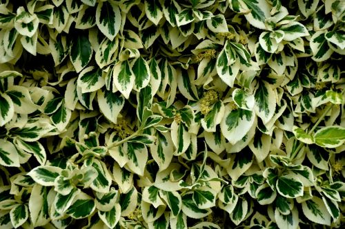 leaves texture scroll area from