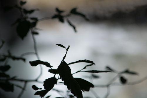 leaves shadow shadow play