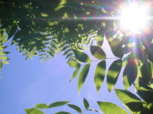 leaves sunlight sunbeams