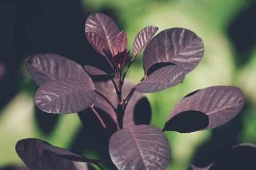 leaves red leaves tree