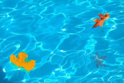lapai,lapai,kritimo spalvos,kritimas,kritimo lapai,fonas,kritimo fonas,palieka foną,autum,sezonas,rudens lapai,ruduo,kritimo lapija,vanduo,gamtos trumpalaikiškumas,raudona,geltona,šlapias,baseinas,apmąstymai,tapetai,baseinų lapai,šlapias lapai,palieka baseiną,palieka vandenį,vandens lapai,vandens lapai,lapų vanduo,baseino lapai,lapų baseinas