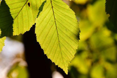 leaves green light