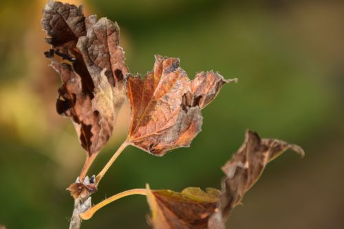 leaves dry nature