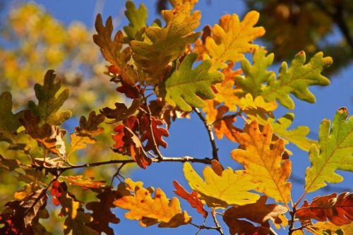 lapai,medis,ruduo,spalvų simfonija