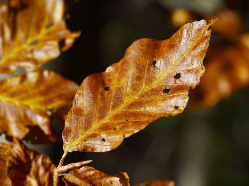 leaves fall autumn leaf