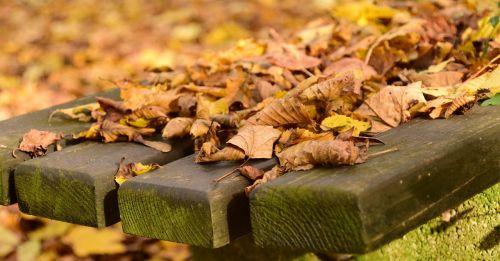leaves autumn november