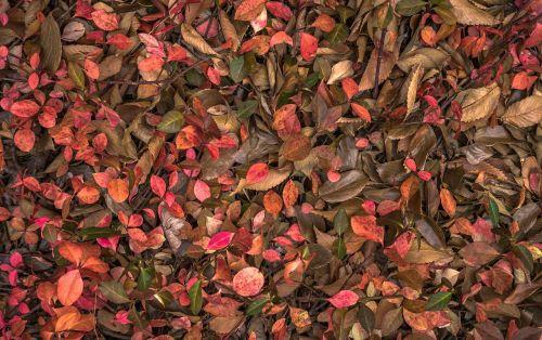 lapai,ruduo,augalai,lapai,lapai,rudens lapai,gamta,ruda,tekstūra
