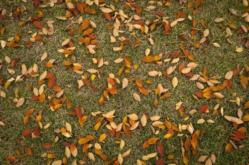 lapai,ruduo,augalai,lapai,lapai,rudens lapai,gamta,ruda,žolė