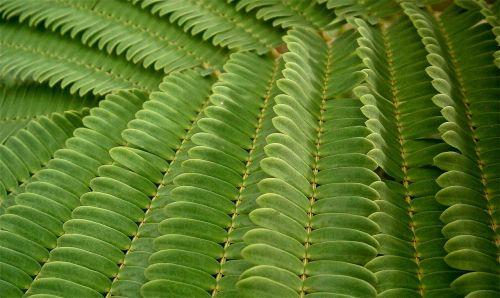leaves green vegetable