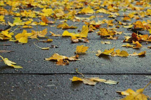 leaves nature autumn
