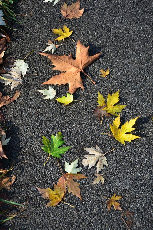 leaves autumn road