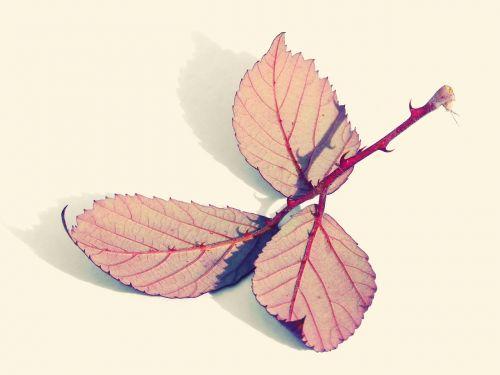 leaves reverse zarza
