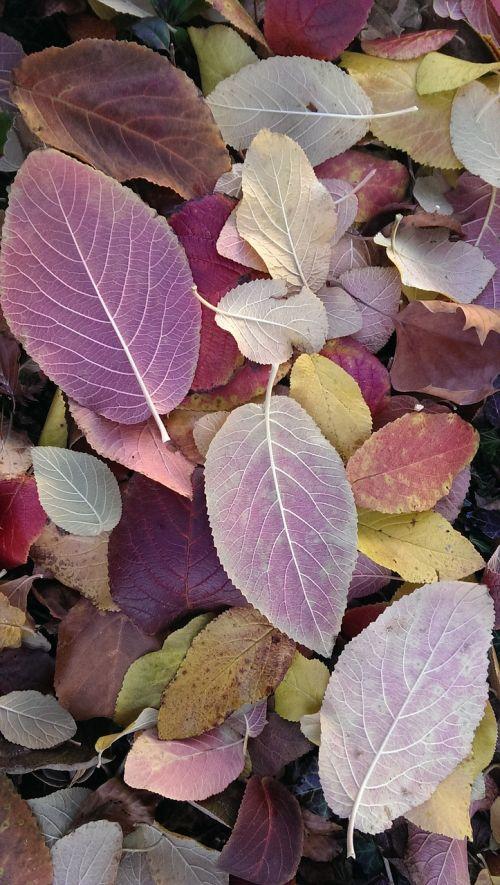 leaves autumn color