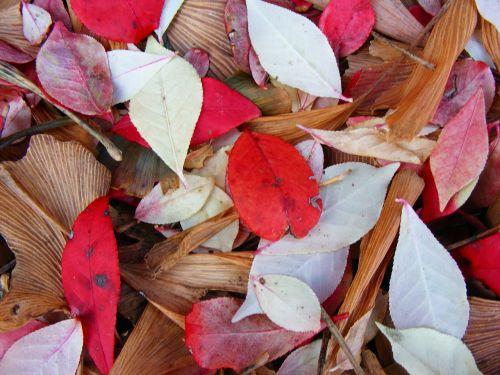 leaves leaf nature