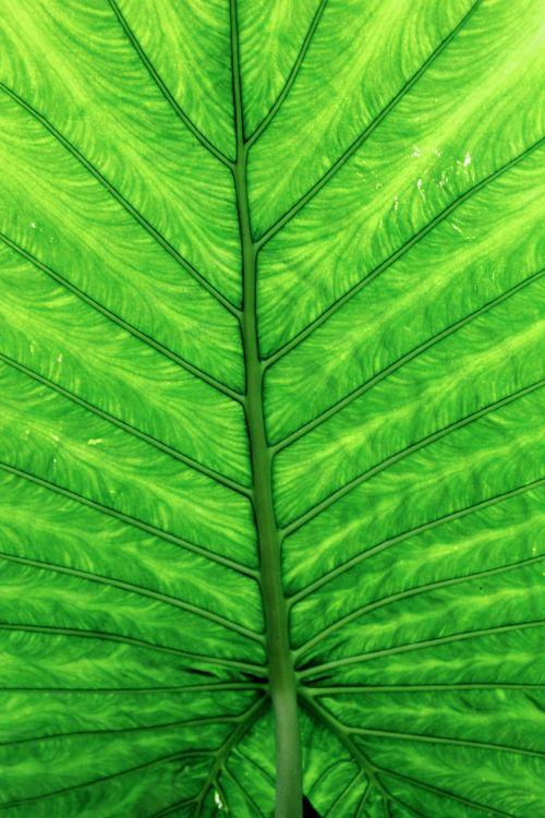 leaves green leaf