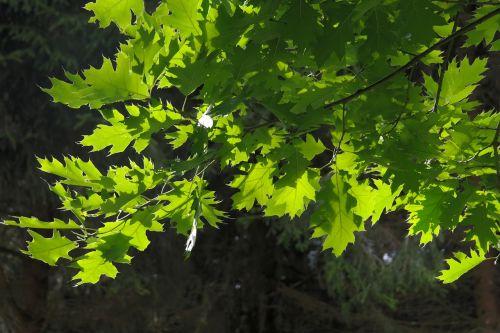 leaves tree aesthetic