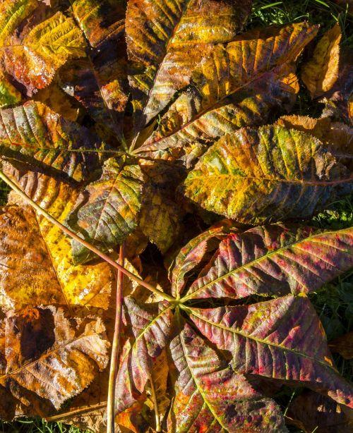 leaves autumn fall