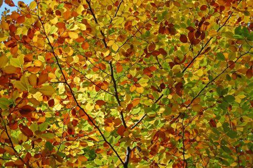 leaves color autumn