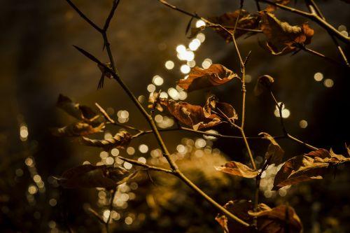 leaves reflections fall foliage