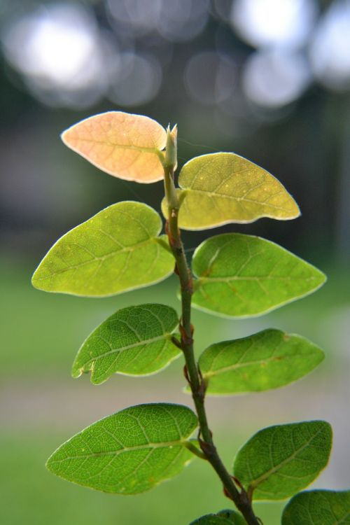 leaves vines dry area plants