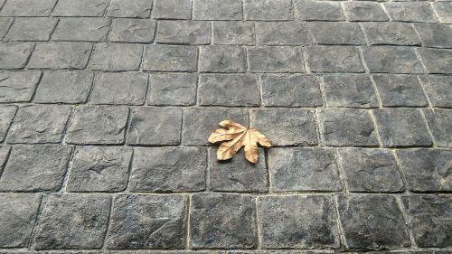 leaves brick floor