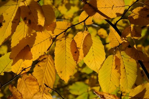 leaves autumn fall color