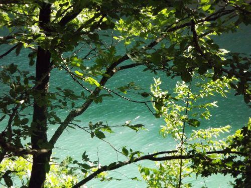 leaves acorns lake