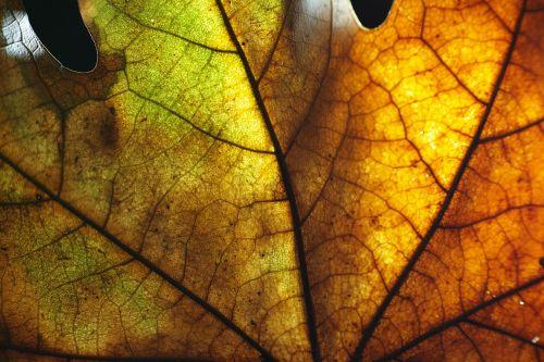 lapai,makro,gražus,geltona,fonas,sausas lapai,sodas,gėlės,gamta,žalias,lapai yra,Uždaryti,pavasaris,augalas,gėlė,ruduo,spalva