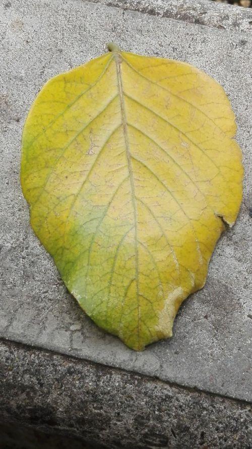 leaves nature yellow sheet