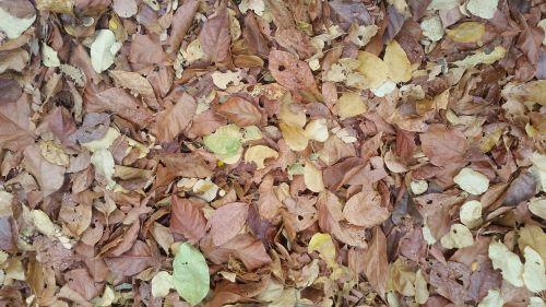 leaves serrated nature