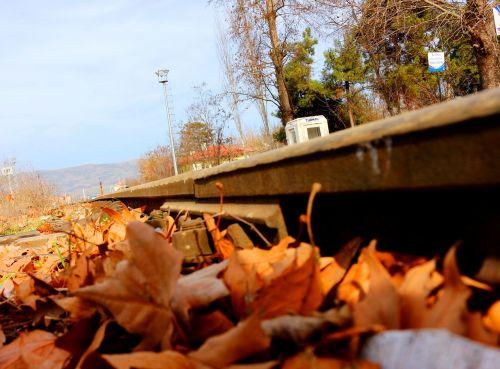 lapai,traukinys,traukinio kelias,bėgiai,žalias,ruduo,sausas lapai,gamta,kraštovaizdis,lapai yra,geltona,Uždaryti