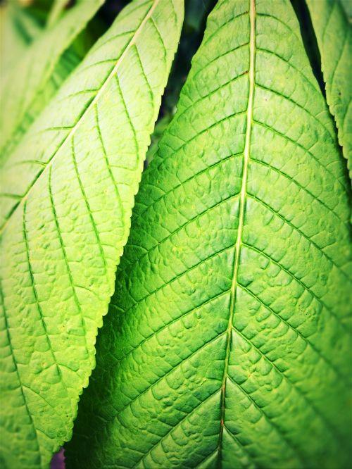 leaves green backwards