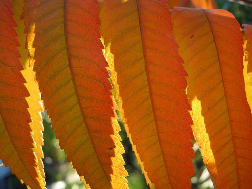 leaves autumn emerge