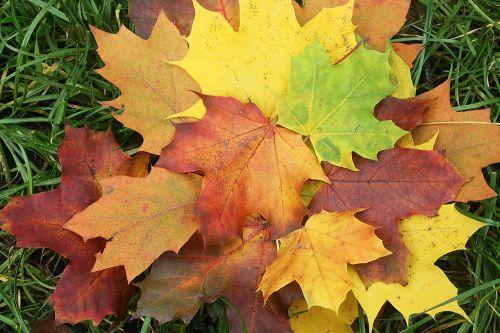 leaves emerge colorful