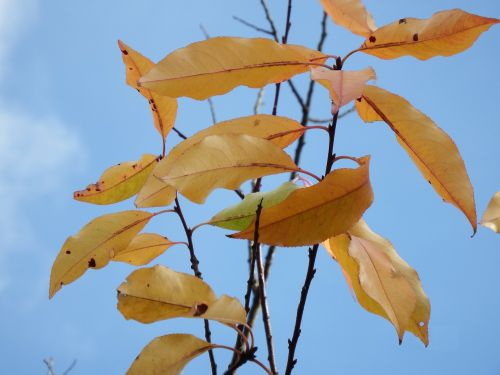 leaves last november