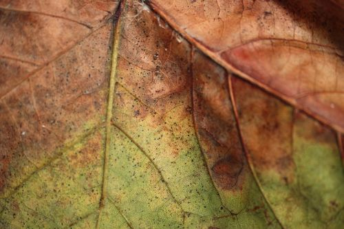 leaves,detail,old,dried up,autumn,macro,plant,beautiful,yellow,flower,flowers,garden,green,background,withered leaves,the leaves are,season,nature,tree,dry leaves,winter,wallpaper,texture,dead,color image,life,live,close