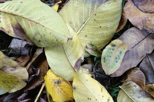 leaves autumn transience