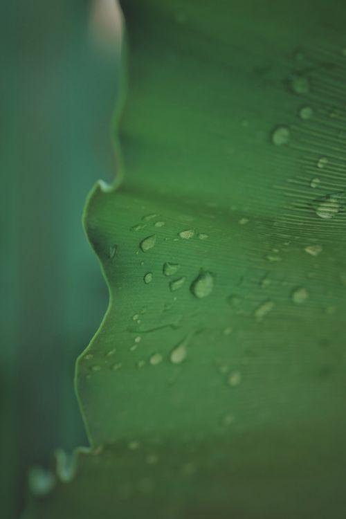 lapai,žalias,natūralus,gamta,medis,žolė,sodas,atsipalaiduoti,žalias lapas,lietus,lietingą