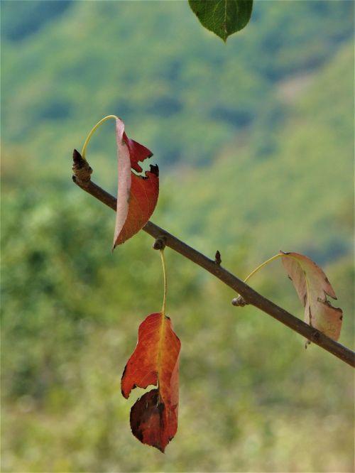 lapai,gamta,lapai yra,medis,sausas lapai,ruduo