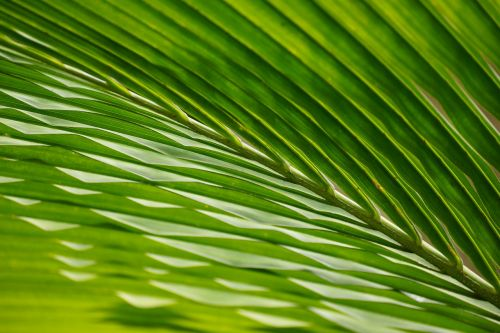 leaves palm trees