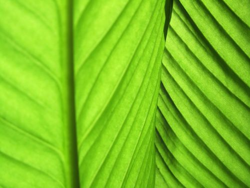 leaves green plant fibres